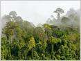 Una mirada al estado actual de IoT en el monitoreo de la pérdida de biodiversidad y el cambio climático, con ejemplos de cómo se usa para monitorear ecosistemas vulnerables (Charles McLellan / TechRepublic) 53