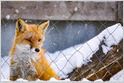 Photo of Mozilla Confirms Agreement to Keep Google as Default Search Engine in Firefox; According to a source, the deal is worth between $ 400 million and $ 450 million a year by 2023 (Katyanna Quach / The Register)