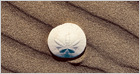 The Central Bank of the Bahamas has officially launched Sand Dollar, its national digital currency, the first of its kind in the world to be fully deployed (Sebastian Sinclair/CoinDesk)